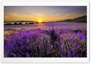 Sunrise In The Field Of...
