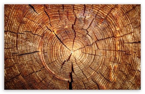 Download Tree Rings UltraHD Wallpaper