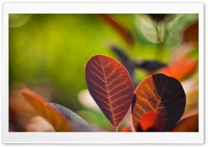 Reddish Leaves Close-up