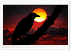 Perched Raven Silhouette, Red...