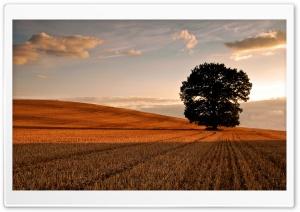 Lone Tree In Field, Autumn