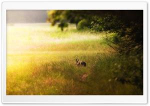 Hare Glade