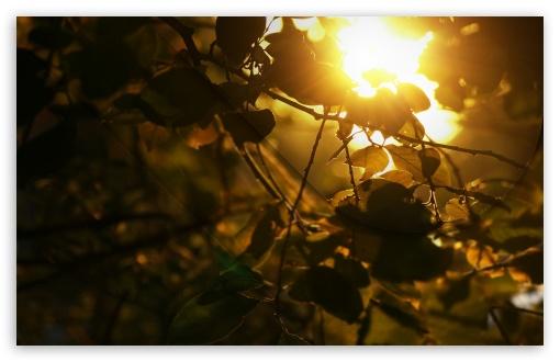 Download Beautiful Autumn Afternoon UltraHD Wallpaper