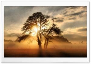 Fog Across The Field