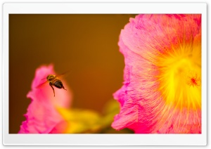Bee Looking for Nectar