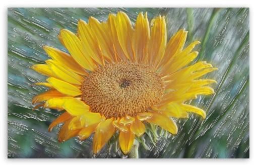 Download Moril original-3D Flower UltraHD Wallpaper