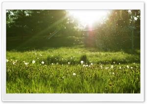 Dandelion Seeds - Make a Wish