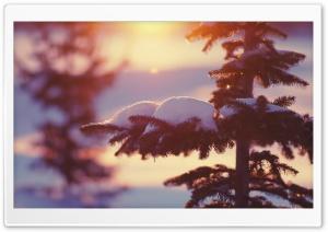 Sunlighted Fir Tree, Winter