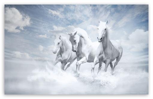 Download White Horses UltraHD Wallpaper