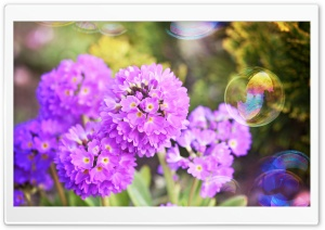 Flowers and Soap Bubbles