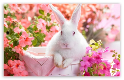 Download Cute Easter Bunny UltraHD Wallpaper