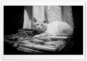 Lazy White Cat