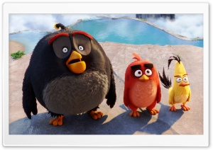 Bomb, Red, Chuck - Angry Birds