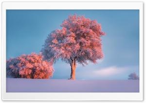 Trees, Winter, Pink Sunset