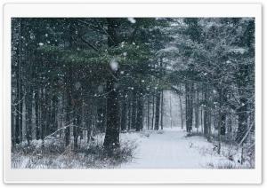 Snowfall, Path, Trees,...
