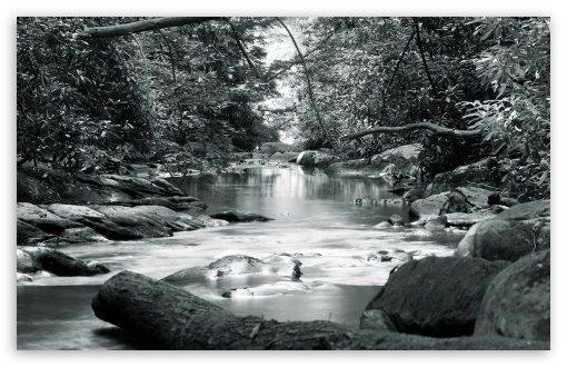 Download Forest Stream Black And White UltraHD Wallpaper