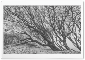 Tree, Wind, Black and White