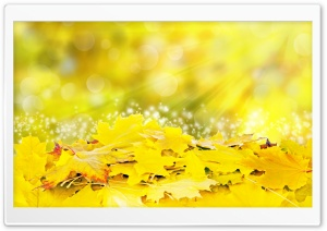 Yellow Leaves, Fall