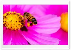 Hard-working Bee
