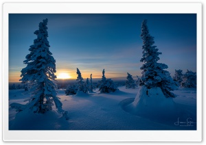 Sunset, Riisitunturi, Trees,...