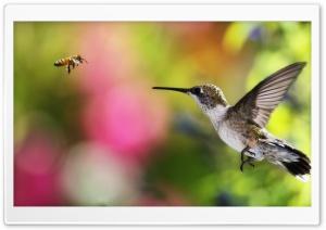 HUMMINGBIRD AND BEE - CHILE