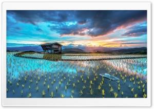 Asia Plantation Of Rice
