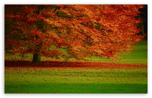 Download Beautiful Orange Tree UltraHD Wallpaper