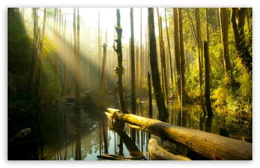 Download Nantou County Forest UltraHD Wallpaper
