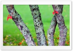Hosting Lichens