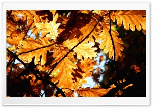 Rust Colored Oak Leaves