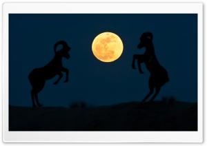 Super Moon Night