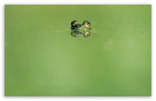 Download Frog Eyes, Green Lake UltraHD Wallpaper