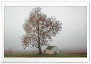 Fog, Tree, House, Autumn