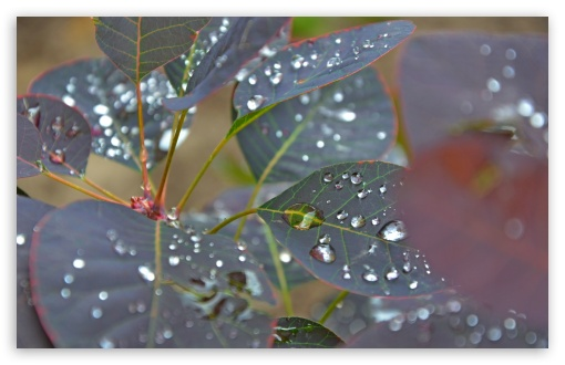 Download Wet Leaves Close Up UltraHD Wallpaper