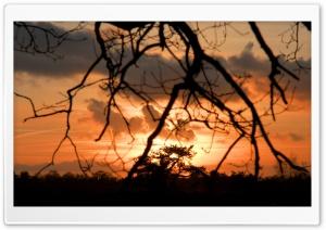 Sunset Wolfheze