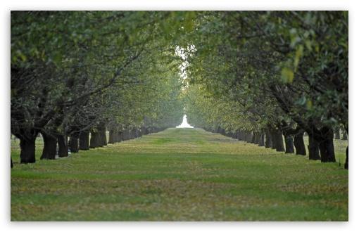 Download Orchard UltraHD Wallpaper