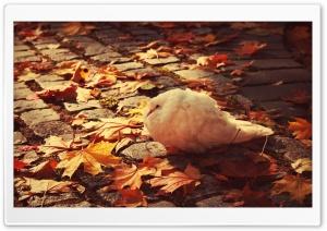 White Dove Autumn