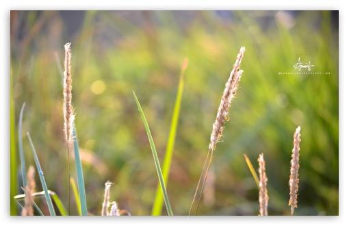 Download Grass UltraHD Wallpaper