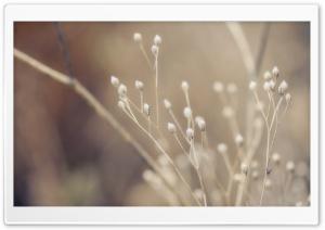 Autumns Visage