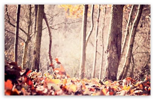 Download Ground Leafage, Autumn UltraHD Wallpaper