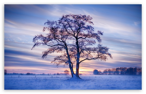 Download Winter Landscape UltraHD Wallpaper