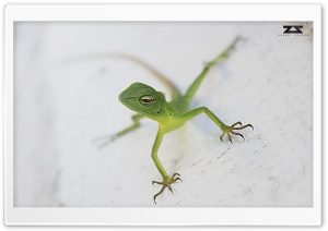 Everybody in Life is a Chameleon