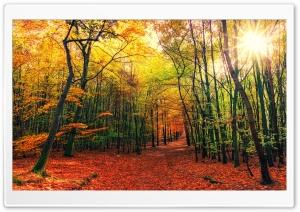 Beautiful Autumn Colors...