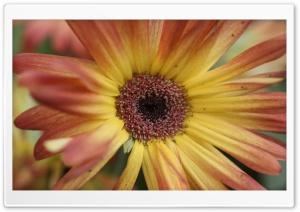 Springs Flower