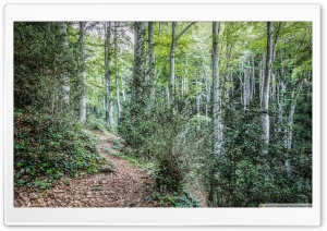 Walking Through La Grevolosa