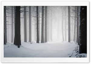 Forest, Winter
