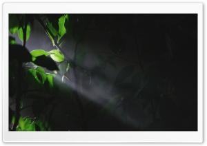 Trees Leaves Lights 2