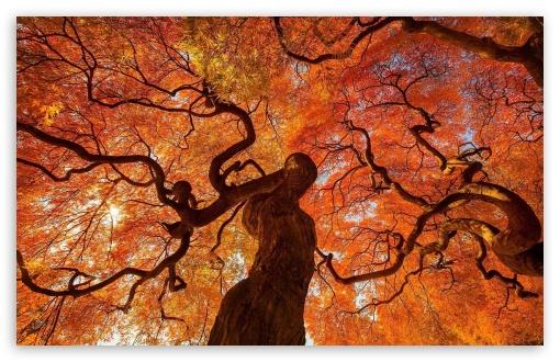 Download Tree UltraHD Wallpaper