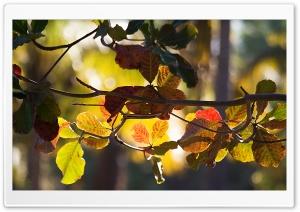 Branch Bokeh, Autumn