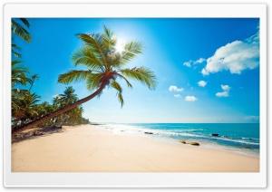 Tropical Sunshine